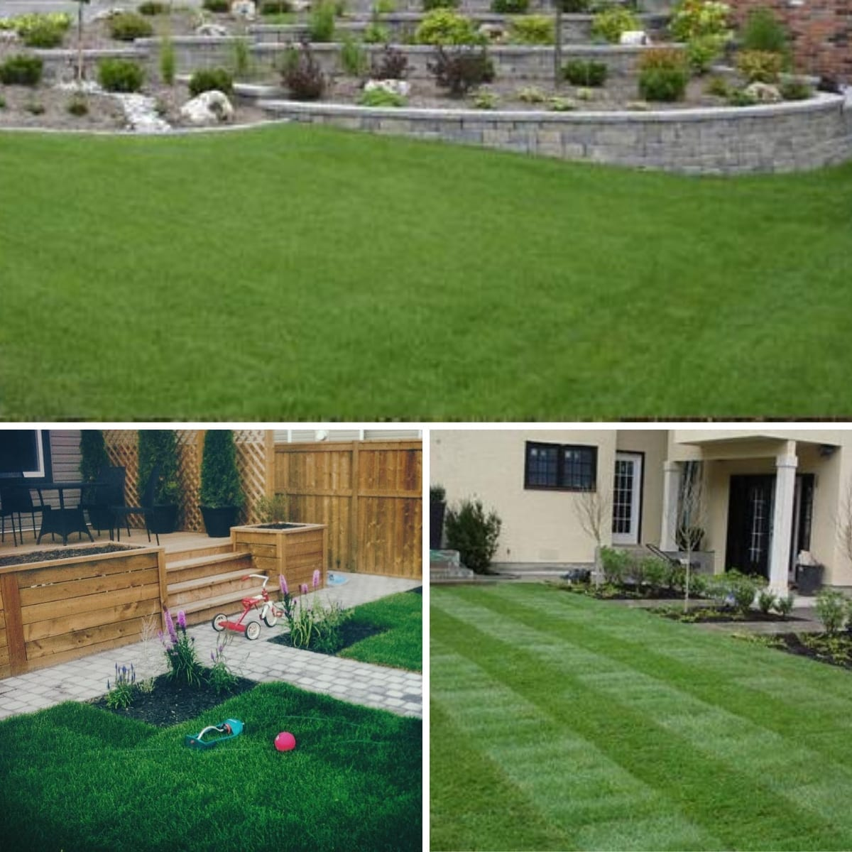 New Look Landscapes - Services: Fresh Sod